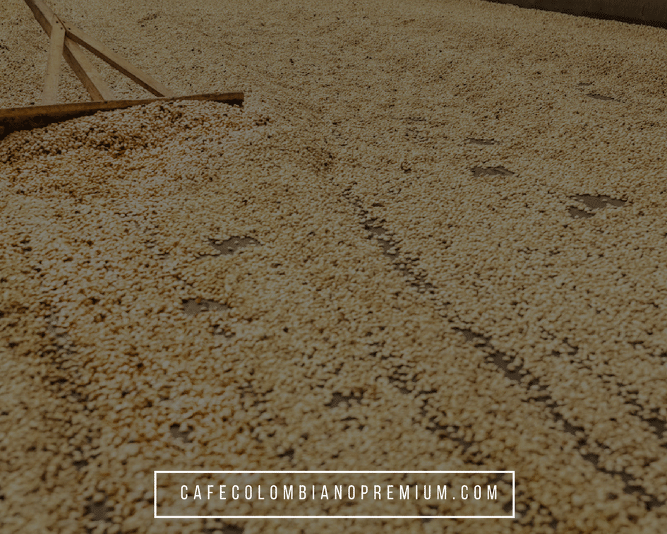 colombian-coffee-drying-of-the-beans