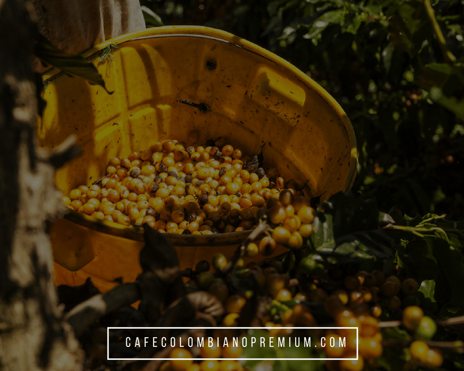 colombian-coffee-exporter-supplier