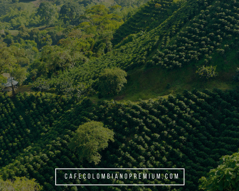 colombian-coffee-triangle-mountains