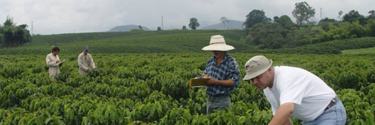 Colombian Coffee from Tolima Region